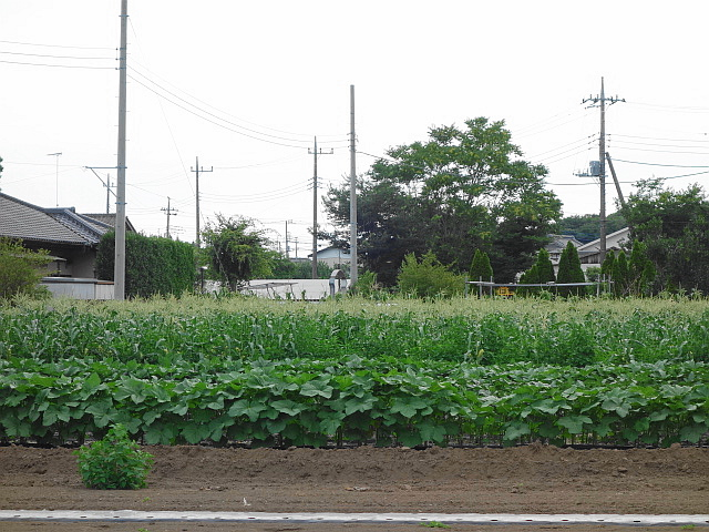 f:id:hakuoatsushi:20170723125008j:plain