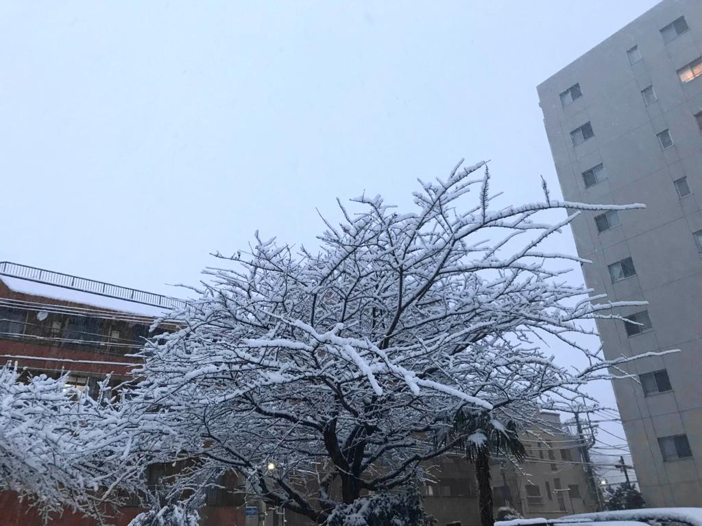 f:id:hakuoatsushi:20180123101628j:plain