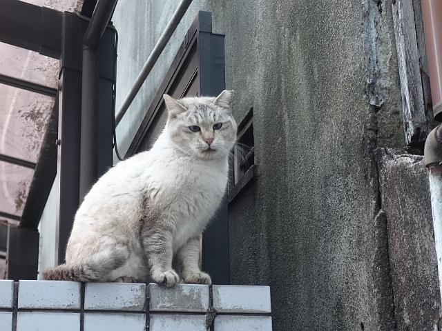 f:id:hakuoatsushi:20180211090544j:plain