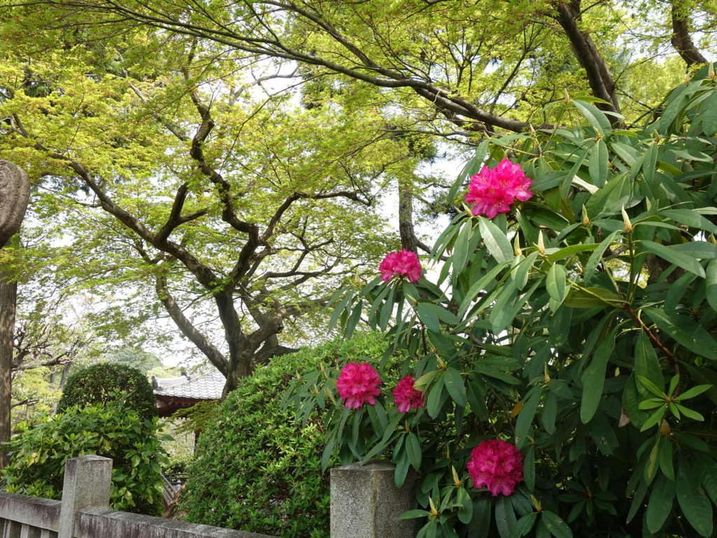 f:id:hakuoatsushi:20180404074332j:plain