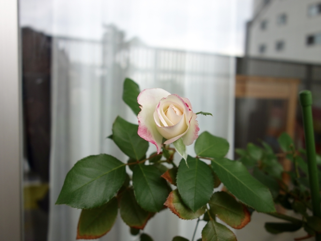 f:id:hakuoatsushi:20181113094504j:plain