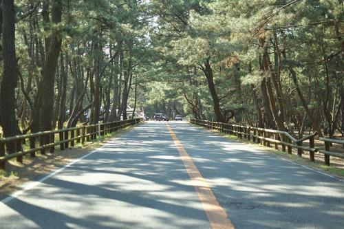 虹の松原の道路