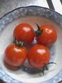 [食]初収穫ミニトマト