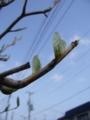 [樹]若葉1