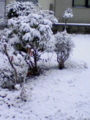 [冬][雪][風景]初雪 携帯から
