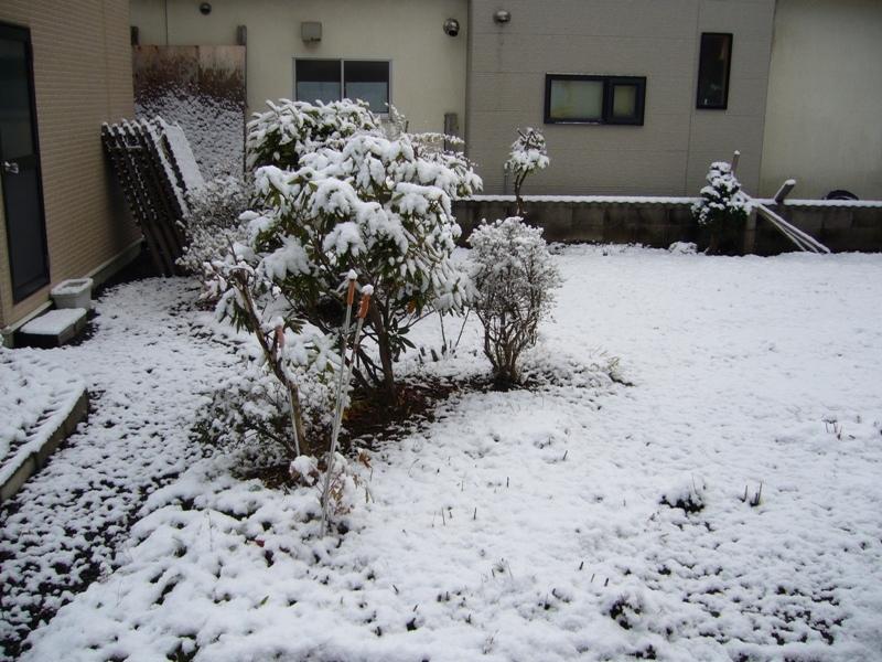 初雪2009_2