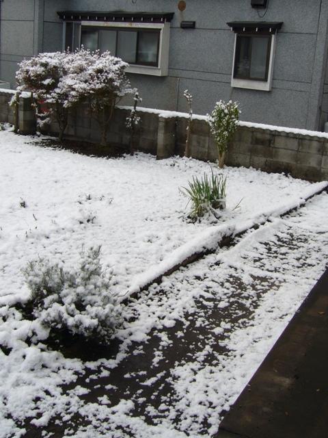 初雪2009_1