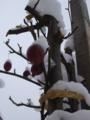 [冬][雪][自然]雪の中の姫りんご2
