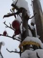 [冬][雪][自然]雪の中の姫りんご1