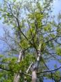 [自然][樹]樹