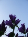[空][花][自然]空に向かう花