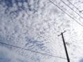 [空][秋]秋の朝のうろこ雲