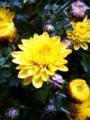 [花]黄色い花