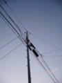 [空]夕暮れの青空と電柱