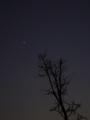 [天文][宇宙]木星と樹