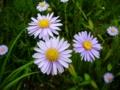 [花][自然]花