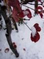 [冬][雪][樹]冬の訪れ