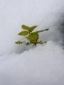 [冬][雪][自然]冬の訪れ2