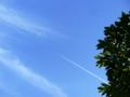 [空][飛行機][樹]途切れても続く飛行機雲