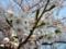 [春][花][樹][桜]