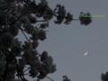 [春][花][樹][桜][月]ソメイヨシノと三日月