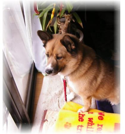 リビングの窓から、出かけるお姉ちゃんを見送るハルの写真