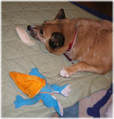 カエルのぬいぐるみと並んで寝ているハルの写真