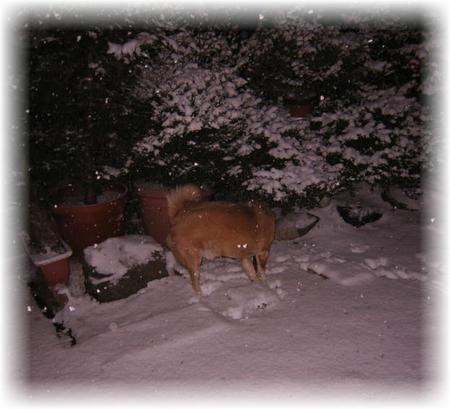 ちょっと積もった雪の中のハルの写真