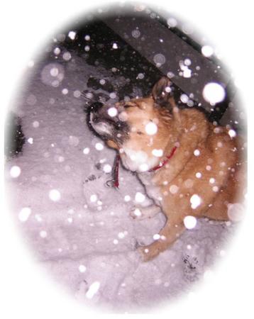 降ってくる雪と遊ぶハルの写真