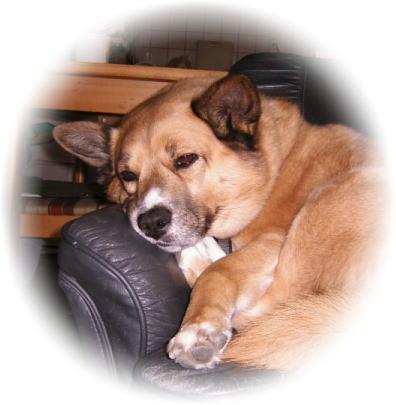 ソファーの上で半目状態でボーとしているハルの写真