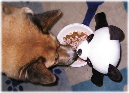 ハルのご飯のお皿を挟んで、パンダの玩具と鼻付き合わせるハルの写真