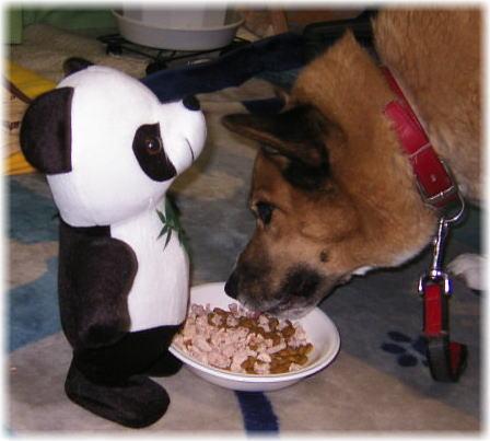パンダにお皿を押されながら、ご飯を食べるハルの写真