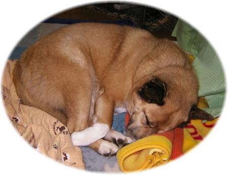 かあしゃんの足元で丸まって眠るハルの写真