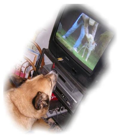 クイールの映画を見ているハルの写真