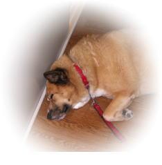 ひたすら寝るハルの写真