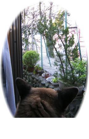 家のうらの小学校の桜を見ているハルの写真