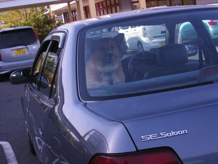 車のリアガラスからお店の入り口を見つめているハル