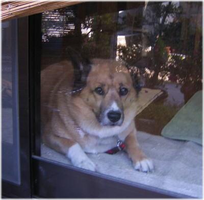 リビングのガラス戸の傍で拗ねるハルの写真
