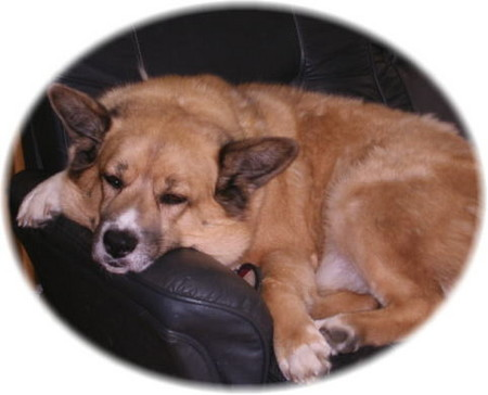 お気に入りのソファーで、手足だらっとして寝ているハルの写真