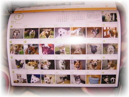 今年の1月の365カレンダーの写真