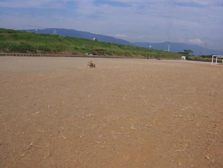 ボールを追いかけて、懸命に走っているハルの写真