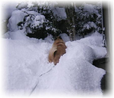 ハルの体が埋まってしまう雪の中へ突進していくハルの写真