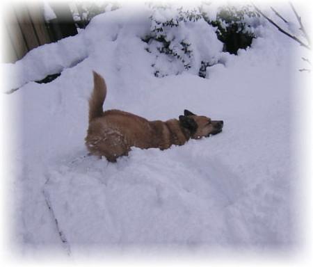 飛んで飛んで飛んでも雪の中へ埋まってしまうハルの写真