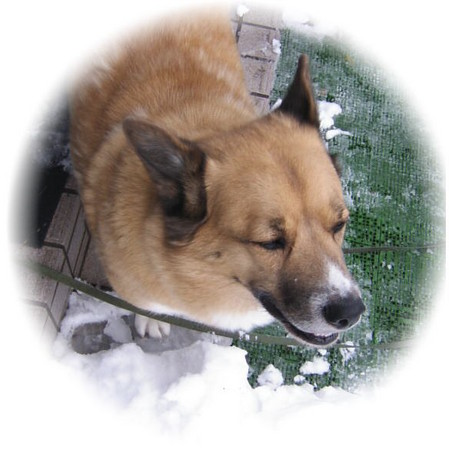 雪の庭を眺めて遠い目をしているハルの写真