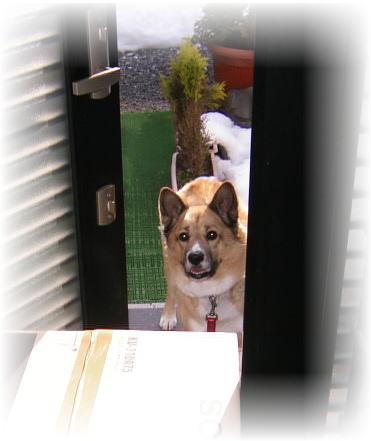 ちょっとだけ開いている玄関ドアの外から、家の中を見ているハルの写真
