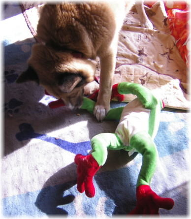 大きなカエルのぬいぐるみの手を噛むハルの写真