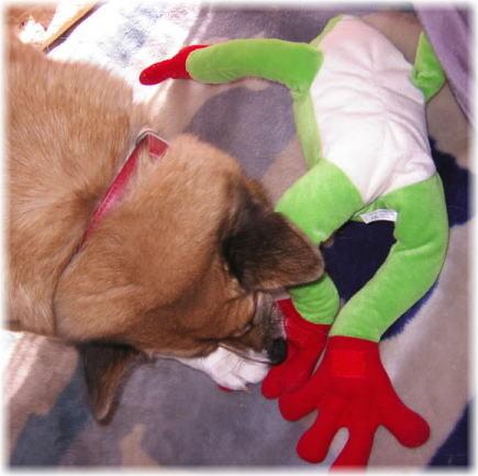 大きなカエルのむいぐるみの足を噛むハルの写真