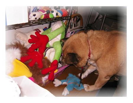 自分の玩具箱から今日のお気に入りを取り出そうとしているハルの写真