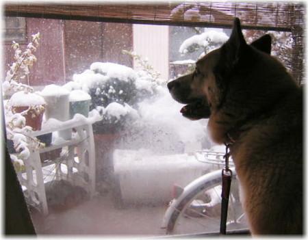 家の中から降ってくる雪を見ているハルの写真