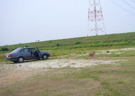 河原のグランドで車の傍から離れようとしないハルの写真